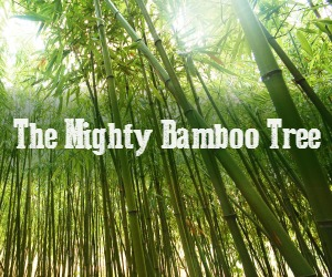 Lgim The Mighty Bamboo Tree The Official Blog Of Ninja Coaching